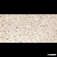 Плитка Alaplana Bee BEIGE 9×500×250