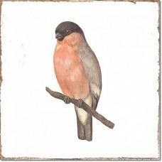 Плитка Fabresa Forli DECORBIRDS