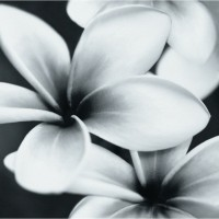 Плитка Opoczno Pret-a-Porter Flower Grey Composition декор 10×750×750