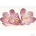⇨ Вся плитка | Плитка Cersanit Casablanca FLOWER 45x30 в интернет-магазине ▻ TILES ◅